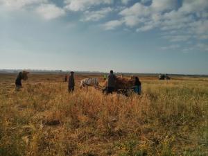 Treballadors del camp a Khuza'a, una terra que feia 13 anys que no cultivaven i ara ho fan protegits per activistes internacionals